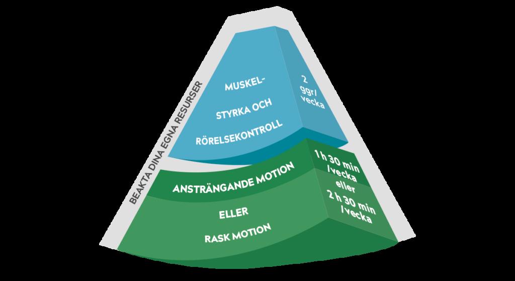 Synnyttäneille tarkoitetun liikkumisen suosituksen pääkuvan yläosa: lihaskunto ja liikkuvuus sekä reipas ja rasittava liikkuminen.